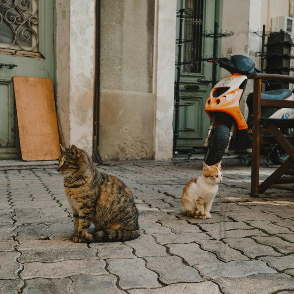 Cats of Chios Greece
