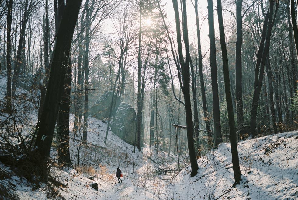 Poland Winter Landscapes, Warsaw National Park