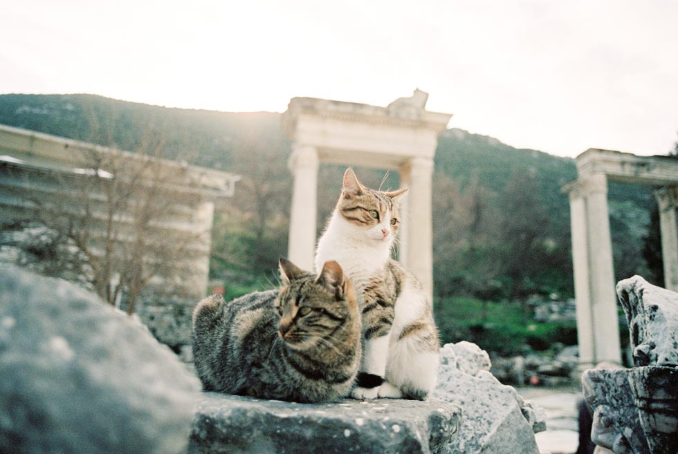 Cats of Ephesus, Traveling in Turkey, Turkish Ruins