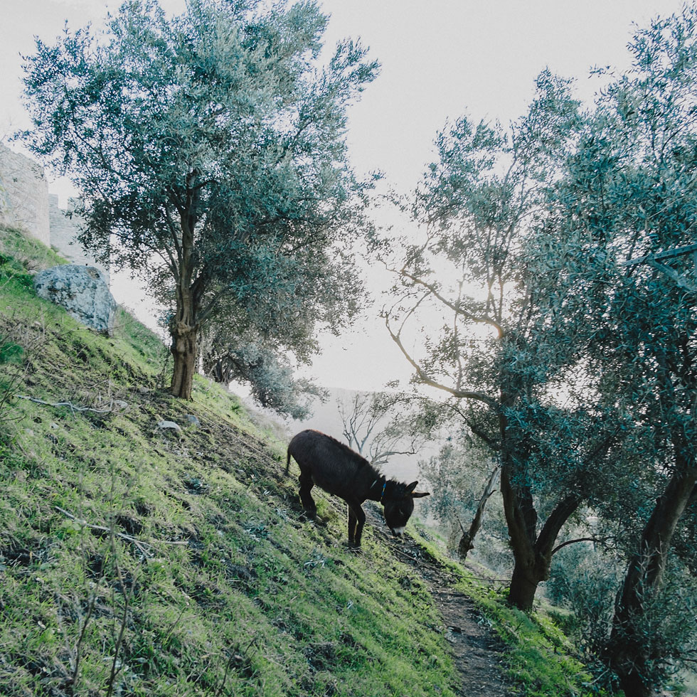 Bodrum Castle Donkey