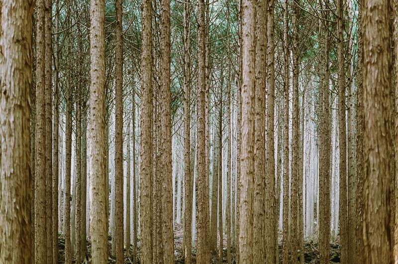 Tomasz Wagner, Iya Valley, Shikoku, Tokushima Prefecture, Japanese Cedar Forests