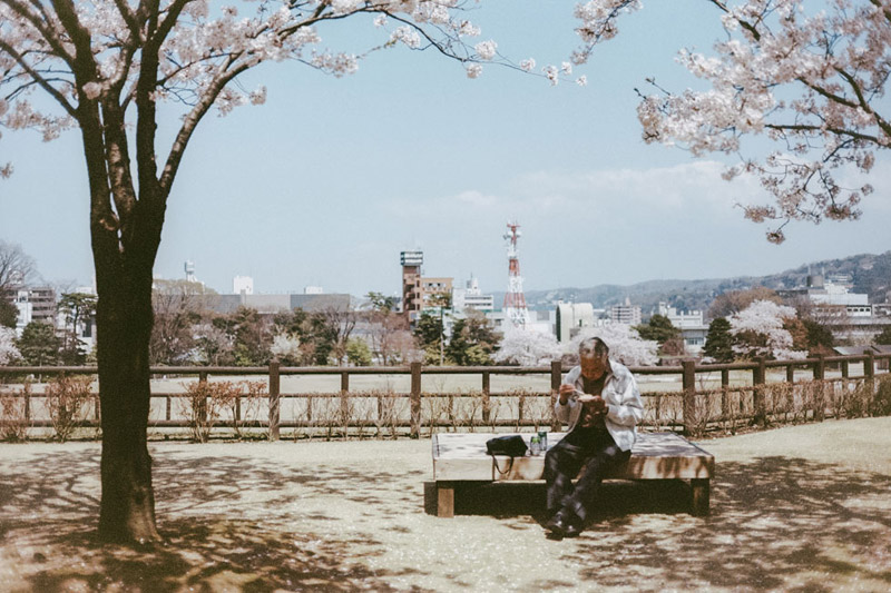 Hanami in Kanazawa, Tomasz Wagner, Cherry Blossoms in Japan, Contax G2, Japan 35mm Film Photography