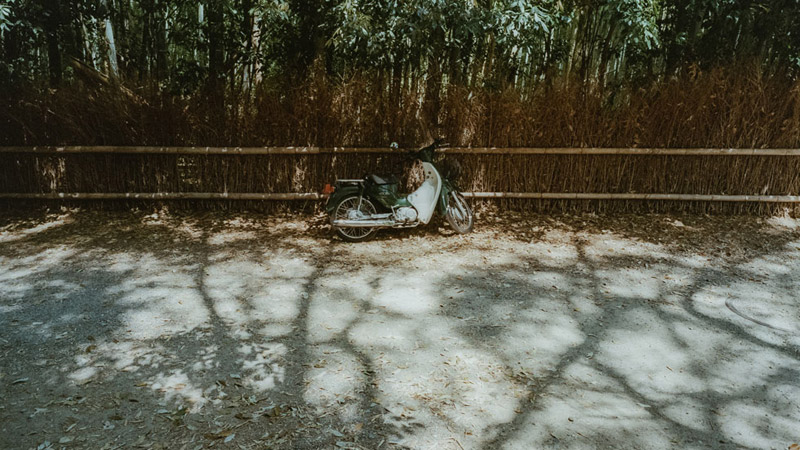 Famous Sites in Kyoto, Tomasz Wagner, Arashiyama Bamboo Forest, Contax G2, Japan 35mm Film Photography