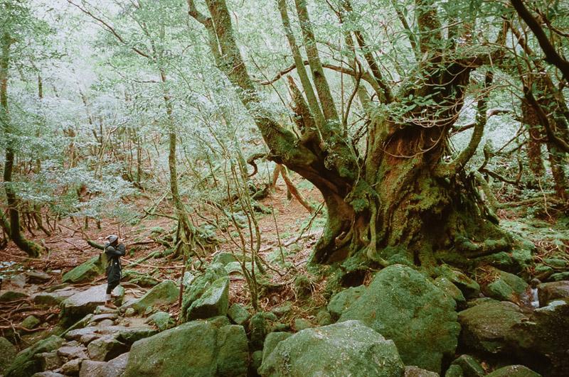 Shiratani Unsuikyo Ravine, Yakushima Hikes, Tomasz Wagner