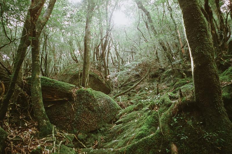 Princess Mononoke Forest, Shiratani Unsuikyo Ravine, Tomasz Wagner