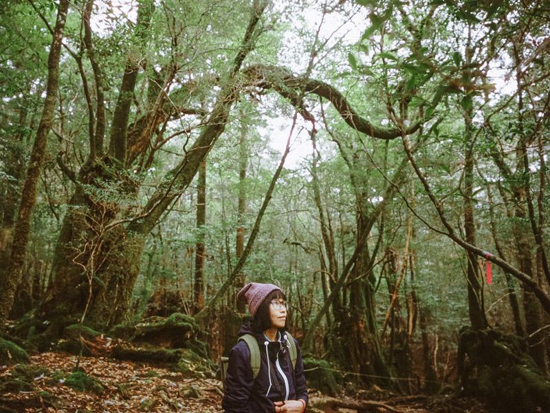 Yakusugiland Trail, Yakushima Hiking Guide, Tomasz Wagner