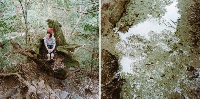 Yodogawa Trail, Ancient Cedars, Yakushima Hikes, Tomasz Wagner
