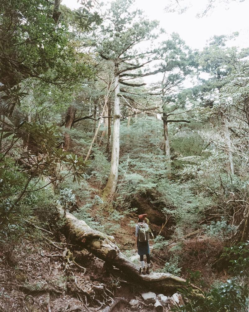Yodogawa Trail, Yakusugi, Yakushima Travel Guide, Tomasz Wagner