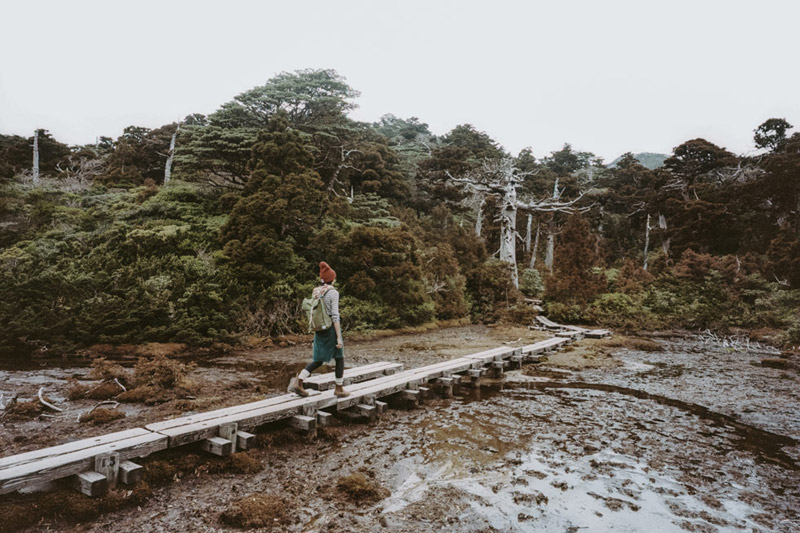 Hana No Ego Highland Marsh, Yodogawa Trail, Backpacking Yakushima, Tomasz Wagner