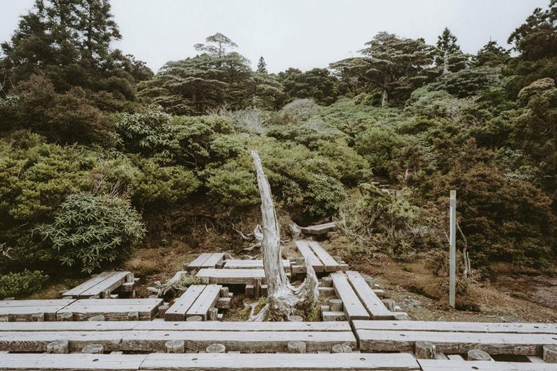 Hana No Ego Highland Marsh, Yodogawa Trail, Yakushima, Tomasz Wagner