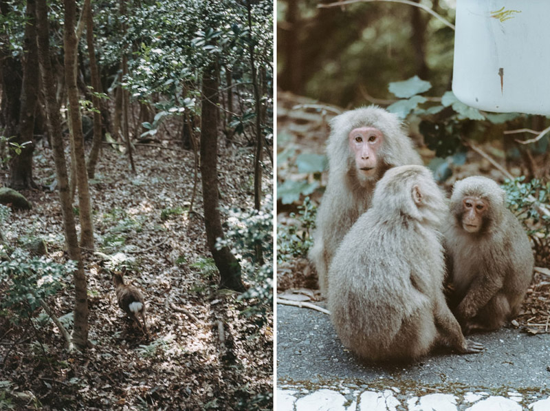 Yaku Monkey, Japanese Macaque, UNESCO World Heritage Sites, Tomasz Wagner