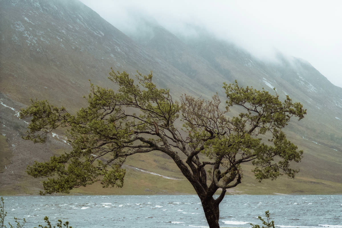 Glen Etive Trees scotland photographing on contax g2 film camera and kodak portra 160