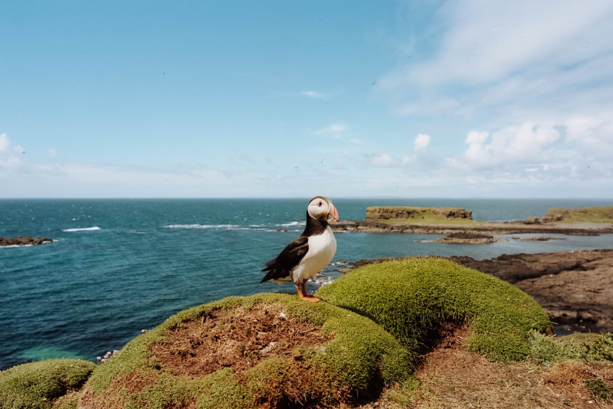 Isle of Staffa Tours, Puffin scotland photographing on contax g2 film camera and kodak portra 160