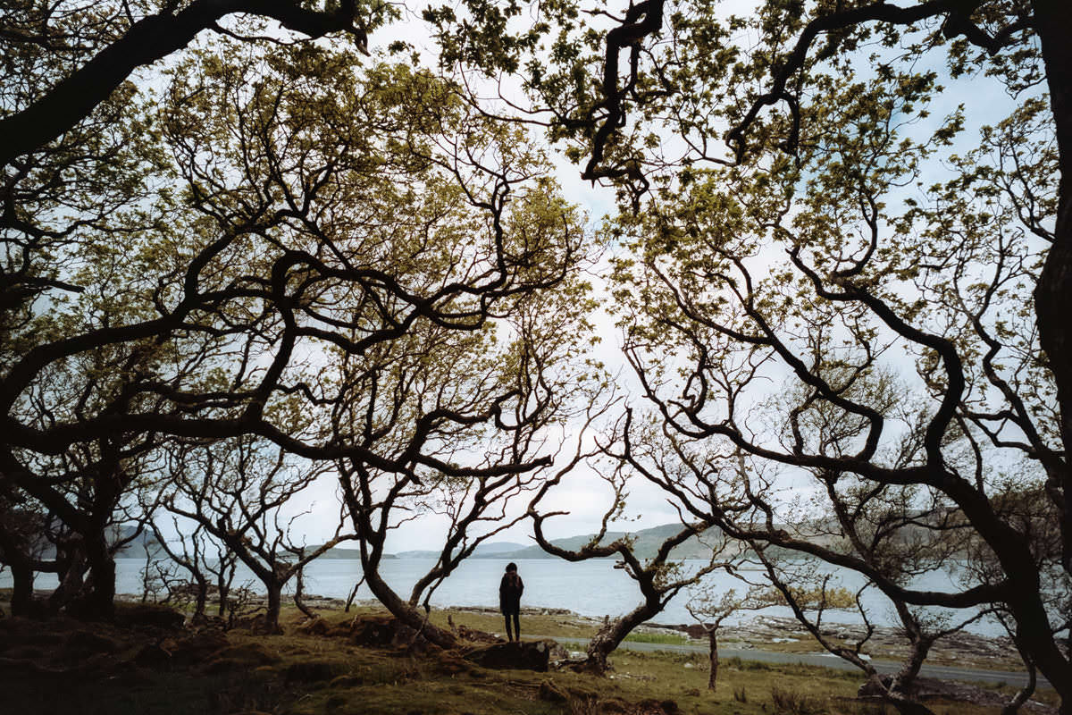 Isle of Mull Forest scotland photographing on contax g2 film camera and kodak portra 160