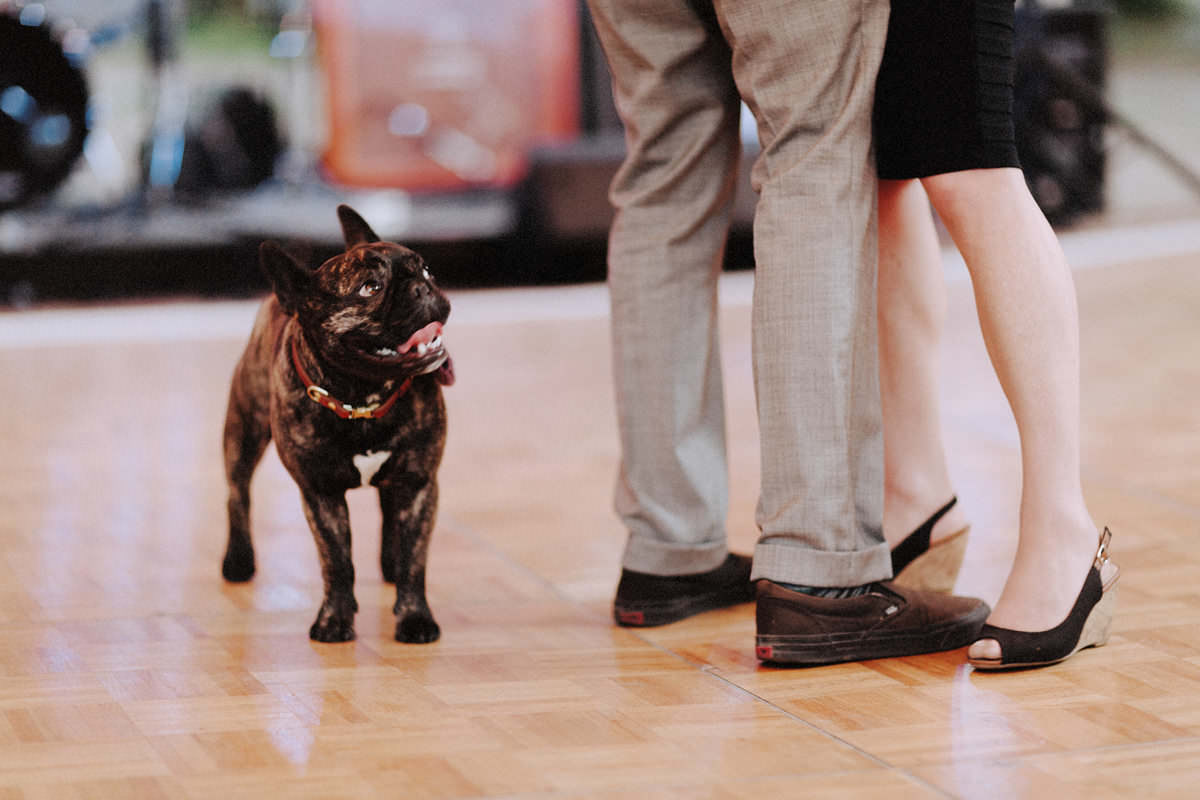 cute french bulldog at campground wedding
