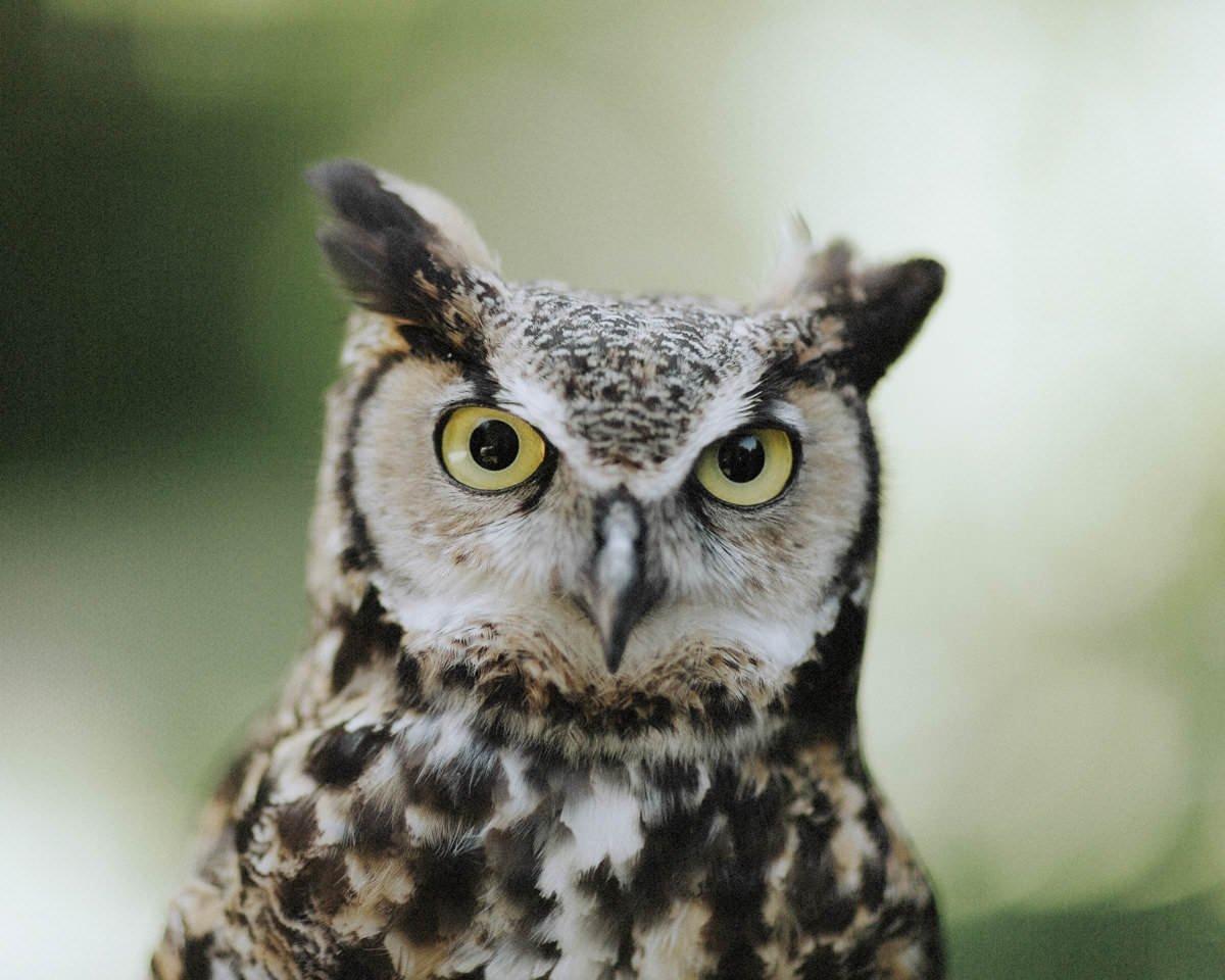 owl wedding hire vancouver