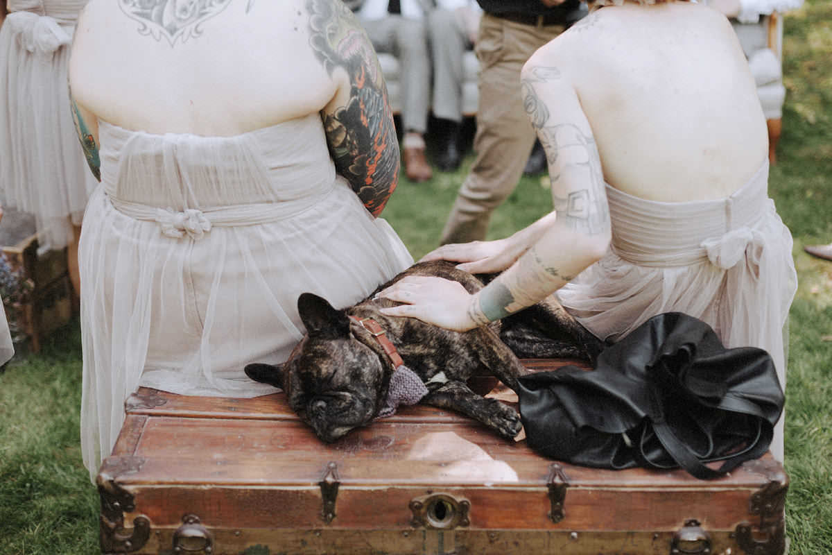 french bulldog sleeping at wedding