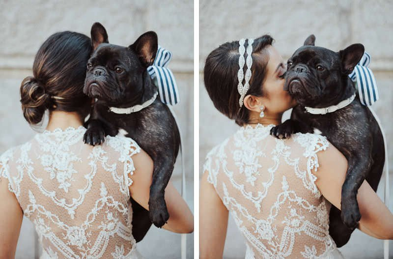 weddings frenchie bulldog vancouver