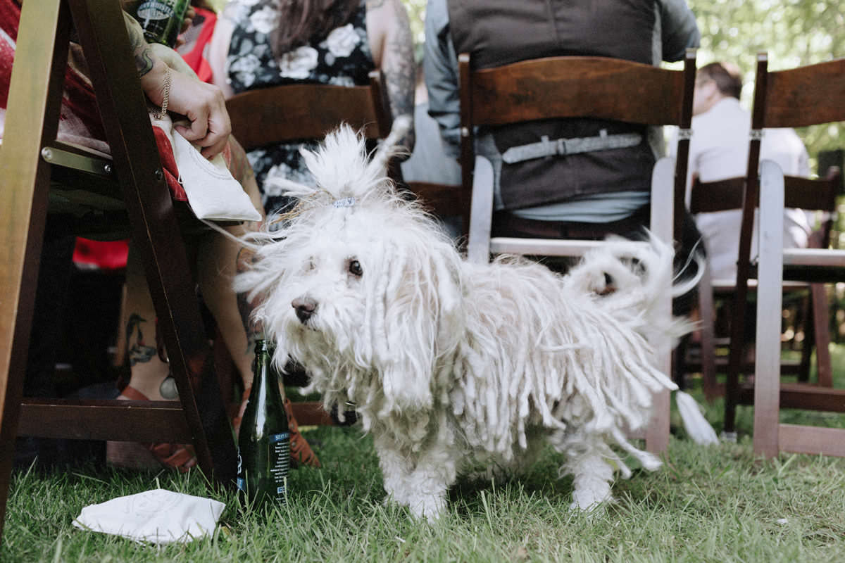 dreadlocked white dog at wedding
