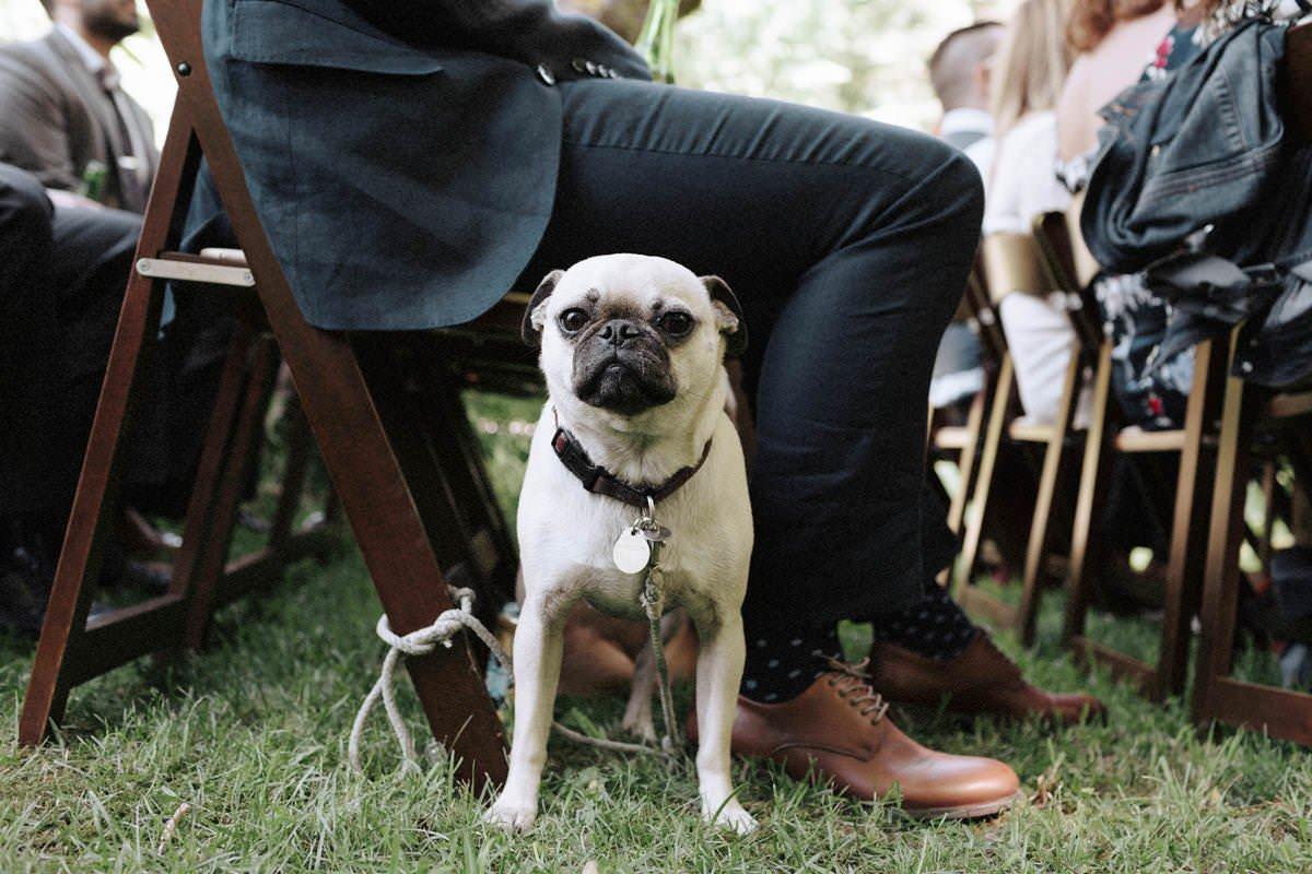dog friendly campsites british columbia
