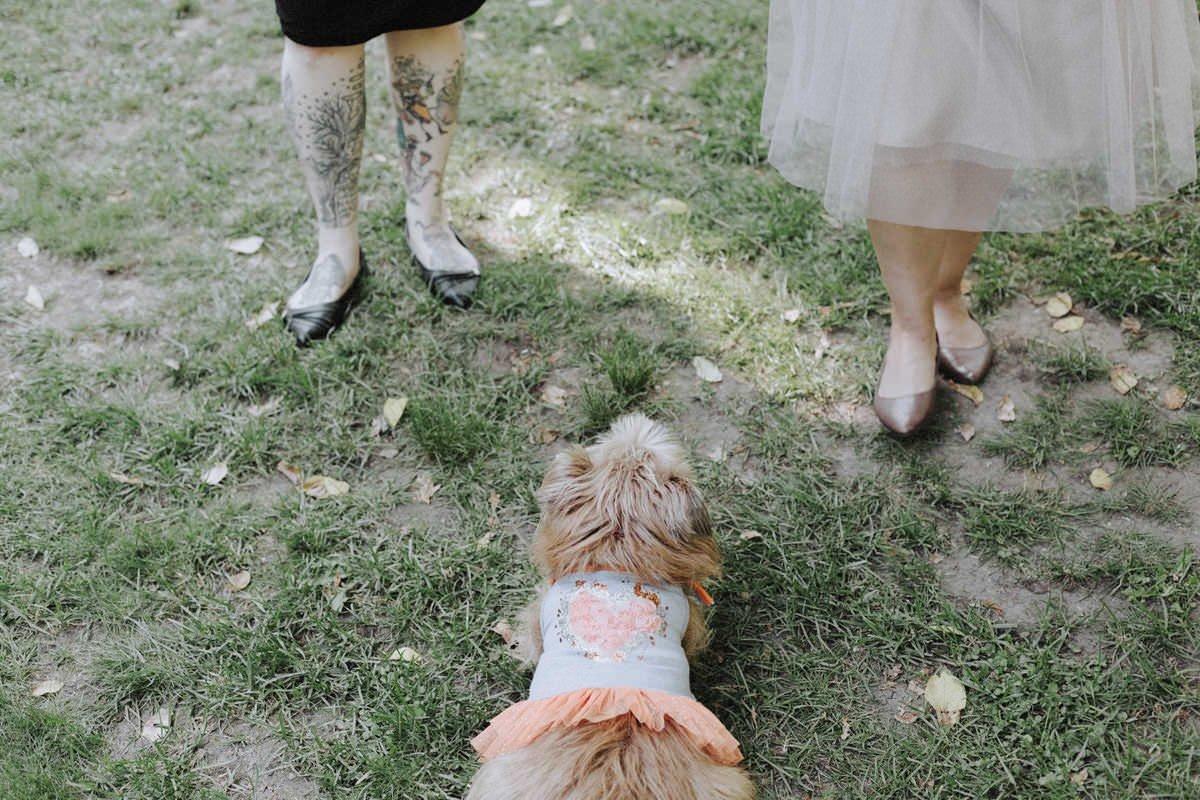 dog at squamish campsite wedding