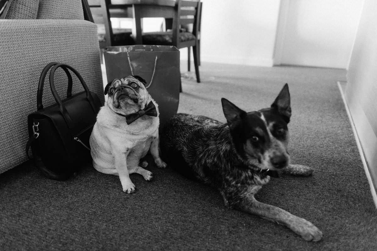 dog friendly venues tofino