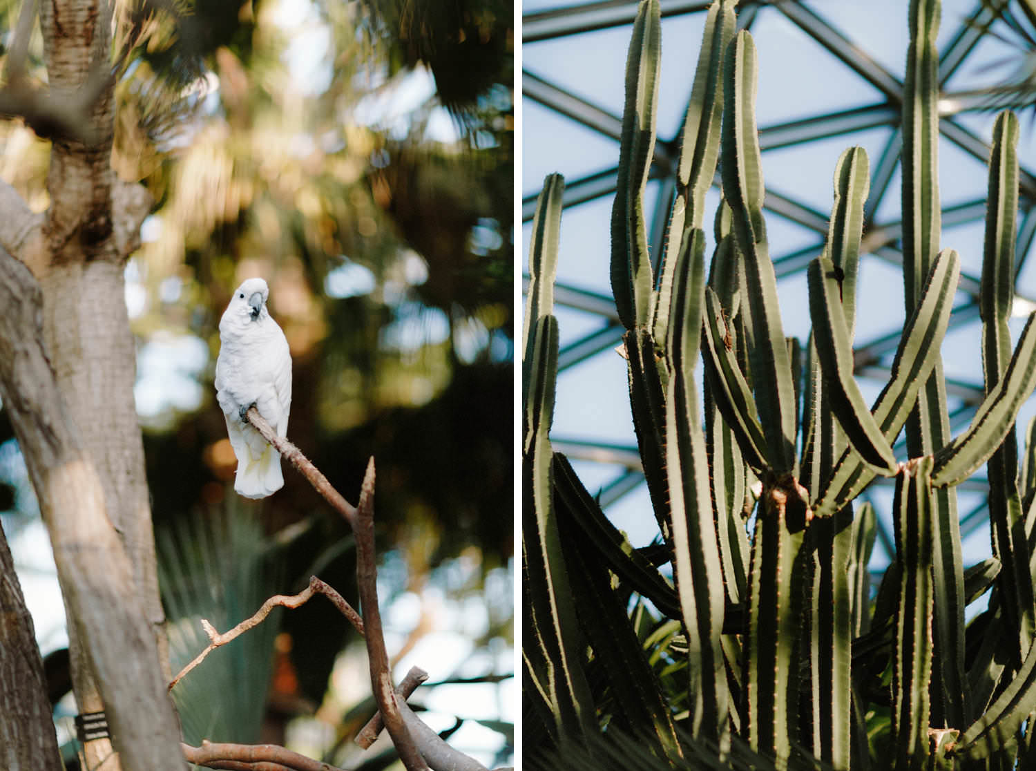 weddings at bloedel conservatory