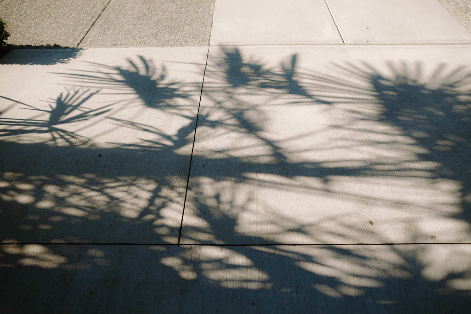 shadows of palm trees on pavement in vancouver