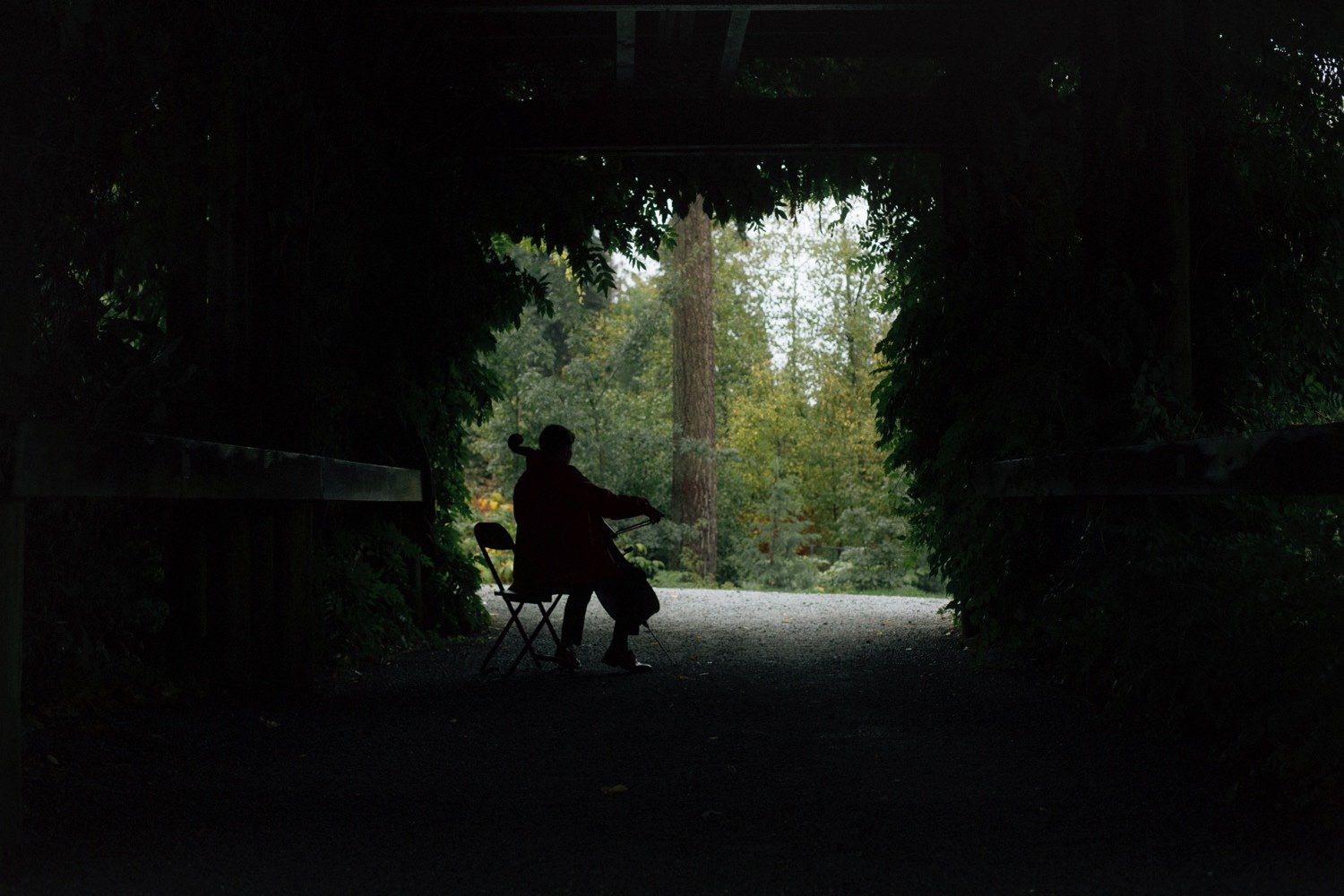 silhouette of cello player at ubc botanical garden